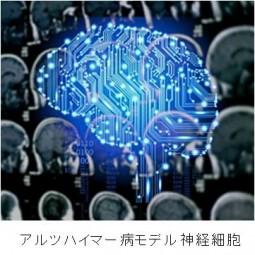 アルツハイマー病モデル神経細胞