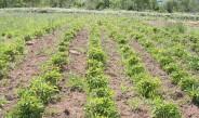 ノエビア自社農場で有機JIS認証取得、オーガニック原材料開発始動