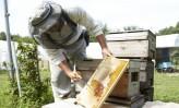 【14】片倉工業、原料蜂蜜の有効活用と化粧品との相乗効果が狙い(下)