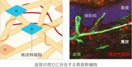 【5】資生堂、肌の自己再生力を高めるコラーゲン産生技術を開発(上)