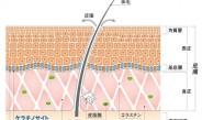 【8】コーセー、iPS細胞を次世代化粧品開発に応用(上)