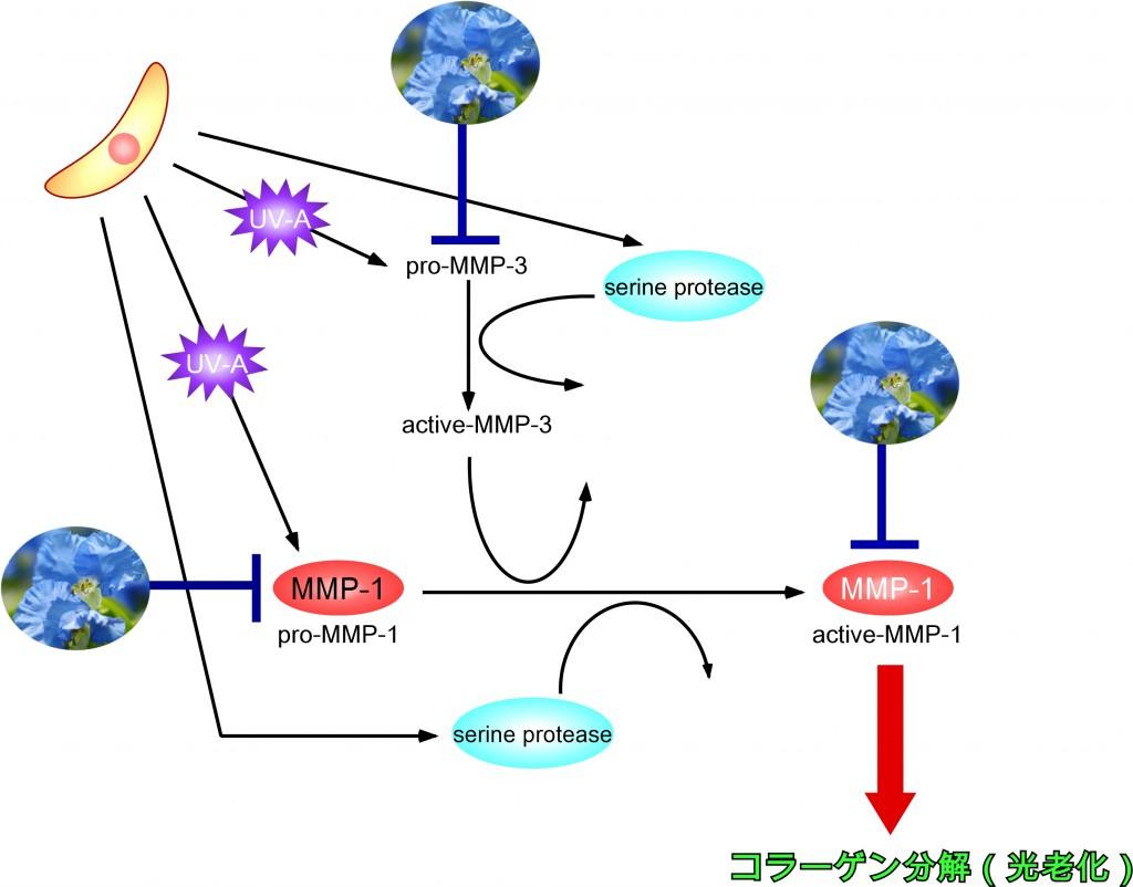 酵素 タンパク質 分解
