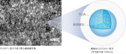 ホソカワミクロン「PLGAナノ粒子」