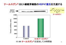 ナ―ルスゲンによるHSP47の増量