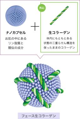 三重らせん構造の生コラーゲン