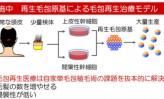 京セラ・理研、オーガンテクノの幹細胞研究 ~3社が脱毛症の治療で合従連衡~(上)