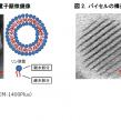 マンダム、皮膚浸透性が高い微細カプセル開発に成功